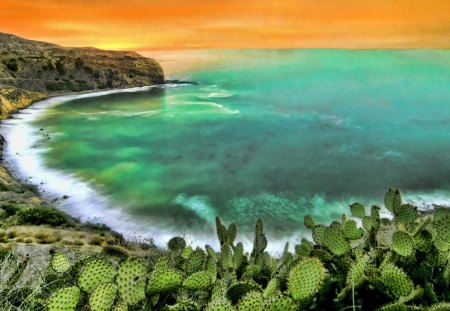 cactus above a beautiful seashore hdr - cactus, orange, horizon, shore, sea