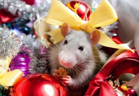Happy New Year - Other & Animals Background Wallpapers on ...