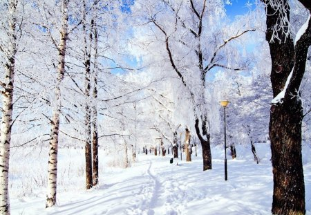snow trees - cold, trees, white, snow, winter