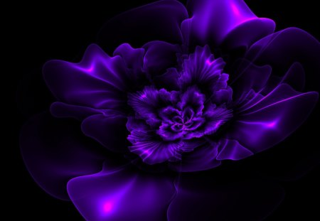 dark purple flowers background  magiel, Beautiful flower