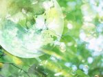 Transparent Globe, green leaves and sunlight