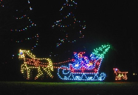 Horse Drawn Sleigh - sled, sleigh, lights, nature, decorations, winter, christmas
