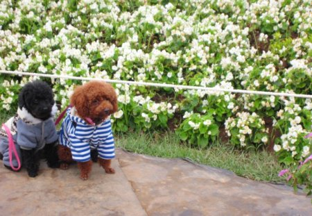 Cute model - dogs, model, cute, enjoy the flowers, lovely