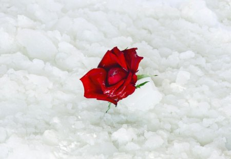 Snow rose 3d and cg abstract background wallpapers on - Rose in snow wallpaper ...