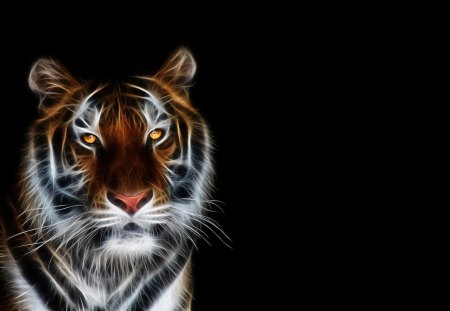 Tiger - dark, tiger, animal, black
