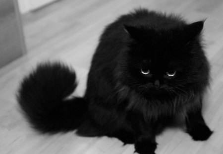 Black_Cat - cool, picture, cat, black