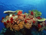 Gorgeous Underwater Coral Reef