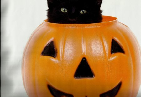 A black kitten in a pumpkin - feline, paws, black, kitten, cute, pumpkin