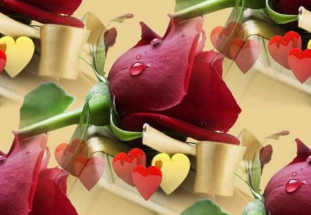 beautiful red roses  photography  abstract background wallpapers, Beautiful flower