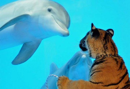 Dolphins looking at you - Dolphins & Animals Background Wallpapers ...