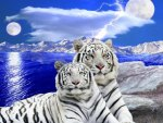 Two white tigers at moonlight