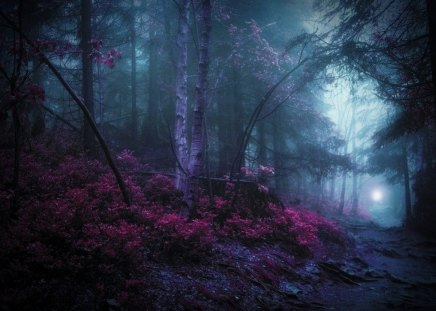 mystic woods - Forests & Nature Background Wallpapers on ...