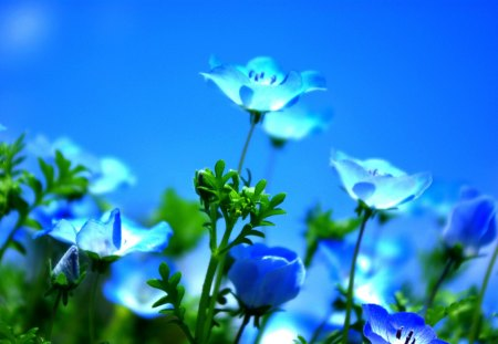 blue spring fields amp nature background wallpapers on