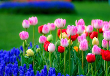 flower field fields amp nature background wallpapers on