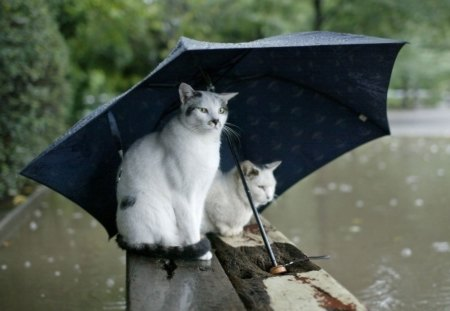 BaD WeAtHeR - rain, cats, nature, flood, umbrella