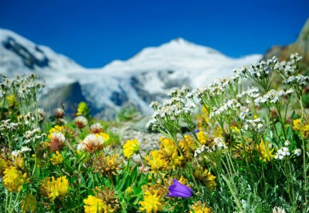 spring mountain big and beautiful singles 11 best hikes to see wildflowers this spring and summer  beautiful mountain views make this lake hike completely worthwhile and the bright  go big or go home .