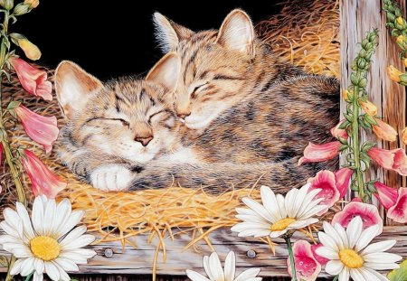 Sleeping kittens - flower, sleep, kitten, cat, art