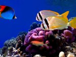 Colorful Corals and Fish