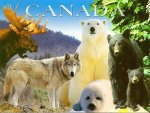 Animals of Canada