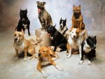 Best Bully Dog Breeds
