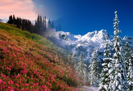 Winter To Spring - flowers, spring, trees, blooms, season, collage, sky, snow, mountains, winter