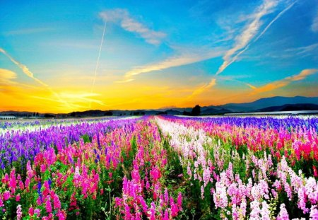Image result for Field of flowers