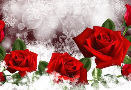 January roses flowers nature background wallpapers on - Rose in snow wallpaper ...