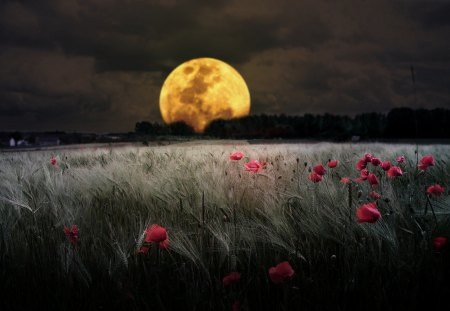 Romantic Moon - flowers, amazing, red flowers, gray, scenic, dark, nice, awesome, gold, picture, pink flowers, poppies, trees, amber, golden, scenario, light, clouds, horizonte, fields, fullscreen, paisagens, cool, beautiful, pink, forests, ambar, bright, ight, moonlit, view, beauty, brightness, moonlight, grass, scene, countryside, grasslands, sky, country, panorama, lightness, plants, image, y, moon