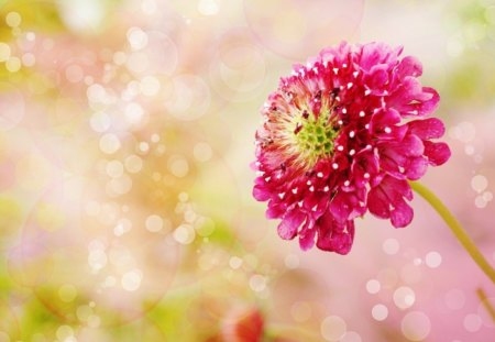 pretty flower  flowers  nature background wallpapers on desktop, Natural flower