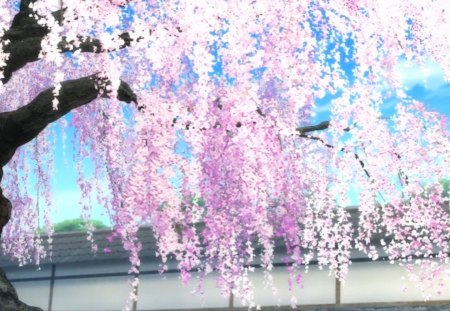 Cherry Blossom Other Amp Anime Background Wallpapers On