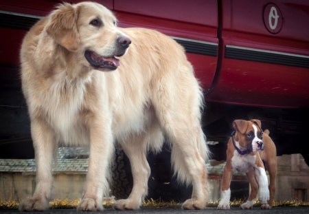 *** Big and small *** - dog, dogs, animals, small, big, animal
