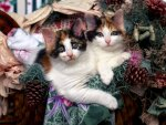 Maine Coon Kittens at Christmastime