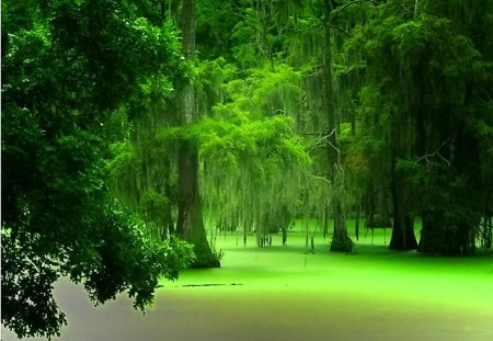 lush green forest wallpaper - photo #10