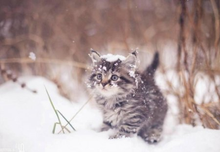 Its so cold! Brrr! - Cats & Animals Background Wallpapers on Desktop...