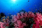 Gorgeous Ocean Corals and Fish