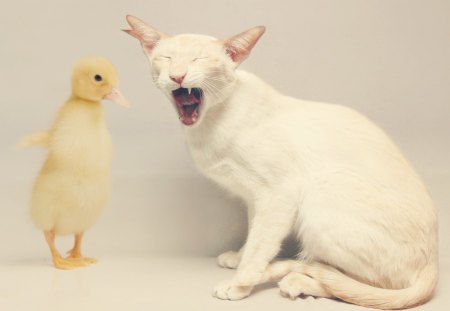 Don't cry, kitty! - cute, animal, yellow, funny, tears, bird, cry, kitten, cat, white, duck