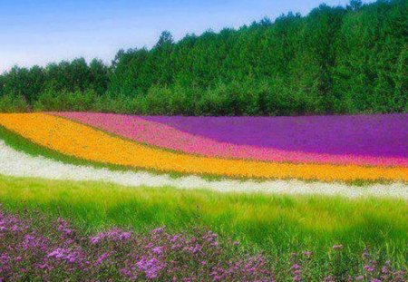 field of glorious color - Fields Of Color