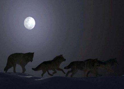 Free Spirited - moon, animals, dogs, wolves