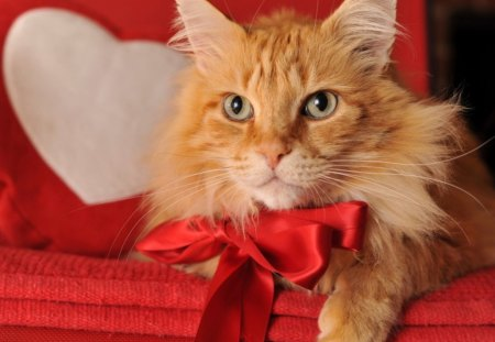 Cute kitty on Valentine' Day - animals, cat, cute, valentines day, heart, kitty, pet