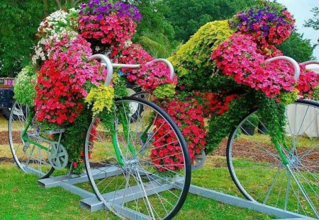 Geraniums - flowers, wagon, pink, red, geraniums