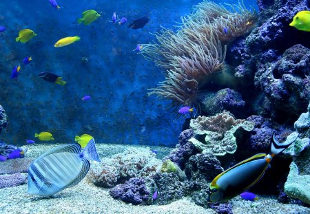 Amazing Blue Corals and Fish - Nature, Corals, Fish, Oceans, Underwater, Sealife