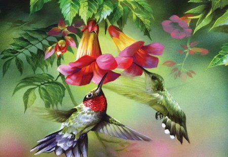Colorful Birds Other Amp Abstract Background Wallpapers On