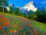 Flowers on mountain slope
