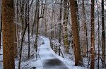 lovely path in the forest in winter