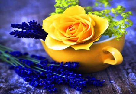 Yellow and blue - blue, cup, rose, lavender, yellow, flower, nature