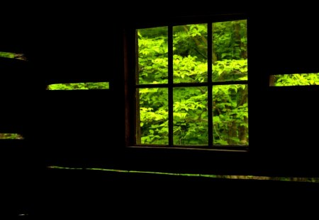 WINDOW VIEW - Nature, Bing, leaves, window, view