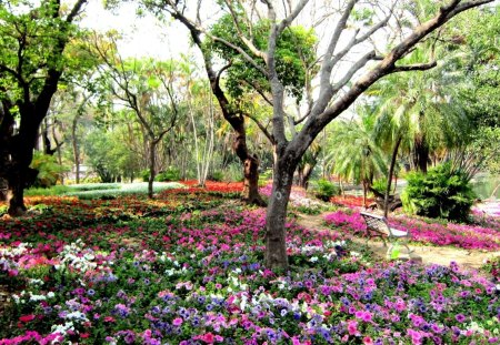 Beautiful park - Forces of Nature & Nature Background ...