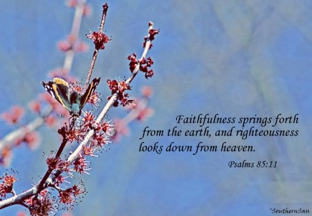 spring wallpaper with bible - photo #37