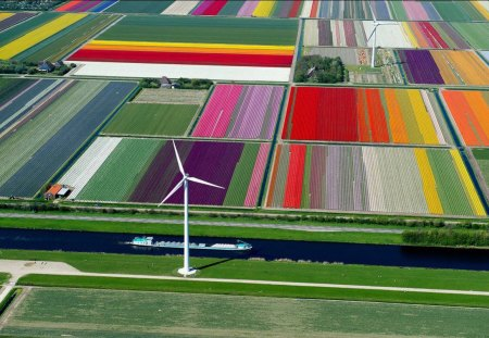 Tulip Farm In The Netherlands - Europe, Flowers, Tulip Farm, The Netherlands