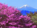 Purple Floral Mountain View